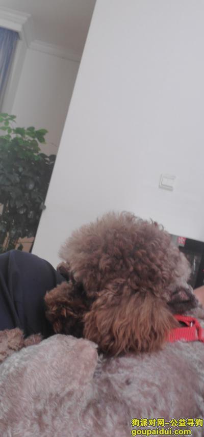 ,寻找爱犬小泰迪,汉台区天河望江郡小区丢失,它是一只非常可爱的宠物狗狗,希望它早日回家,不要变成流浪狗。