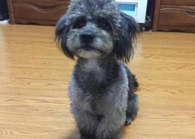 寻狗启示,急寻爱犬,宝贝回家,有酬谢,它是一只非常可爱的宠物狗狗,希望它早日回家,不要变成流浪狗。