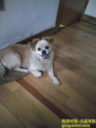 宜昌找狗,狗狗坐标宜昌物流园 谢谢,它是一只非常可爱的宠物狗狗,希望它早日回家,不要变成流浪狗。