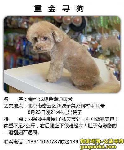 寻狗启示,重金寻狗,常年有效 ,无论多久依然重金答谢,它是一只非常可爱的宠物狗狗,希望它早日回家,不要变成流浪狗。