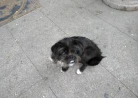 在兰州张掖路捡到小狗狗