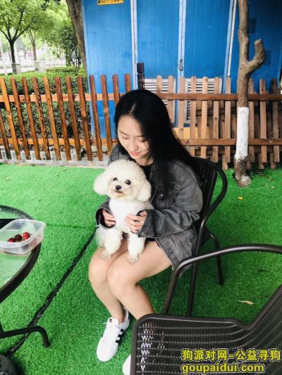 寻狗启示,寻找狗狗,比熊,公的,它是一只非常可爱的宠物狗狗,希望它早日回家,不要变成流浪狗。