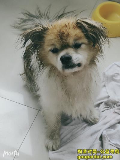 寻狗启示,狗狗丢失,香坊附近,请有爱心的您,看见请联系我,它是一只非常可爱的宠物狗狗,希望它早日回家,不要变成流浪狗。