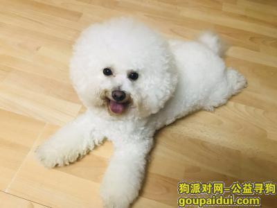 寻狗启示,寻狗启示,比熊于8月25号走失,它是一只非常可爱的宠物狗狗,希望它早日回家,不要变成流浪狗。