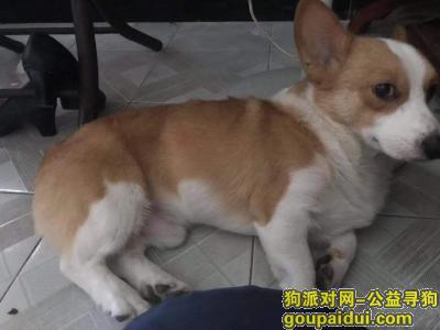 ,寻狗启示,请捡到狗的归还,定给(500元)作为答谢,它是一只非常可爱的宠物狗狗,希望它早日回家,不要变成流浪狗。