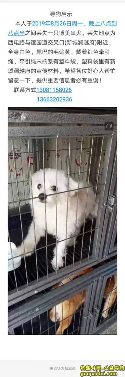 唐山寻狗启示,2019.8.26晚丢失白色博美,它是一只非常可爱的宠物狗狗,希望它早日回家,不要变成流浪狗。