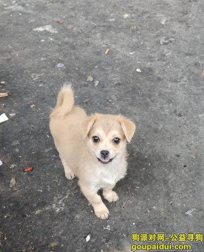 宜宾寻狗网,爱犬贪玩被路人骑车带走无法找到。,它是一只非常可爱的宠物狗狗,希望它早日回家,不要变成流浪狗。