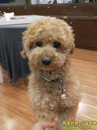 ,求爱心人士帮我寻找爱犬,它是一只非常可爱的宠物狗狗,希望它早日回家,不要变成流浪狗。