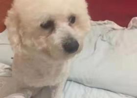 寻狗启示,寻狗(禹航路宝林路走丢),它是一只非常可爱的宠物狗狗,希望它早日回家,不要变成流浪狗。