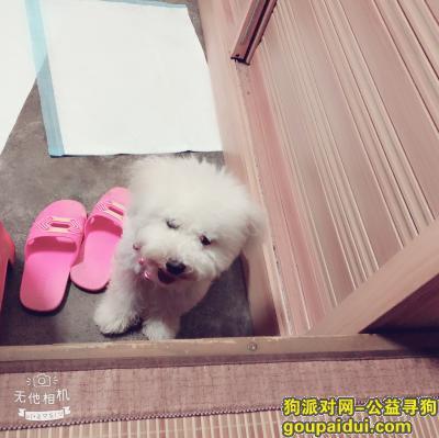 寻狗启示,大沥镇寻找狗狗 旺旺,它可能在流浪,它是一只非常可爱的宠物狗狗,希望它早日回家,不要变成流浪狗。