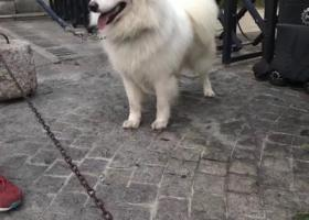 寻狗启示,寻爱狗回家家人一直在等候,它是一只非常可爱的宠物狗狗,希望它早日回家,不要变成流浪狗。
