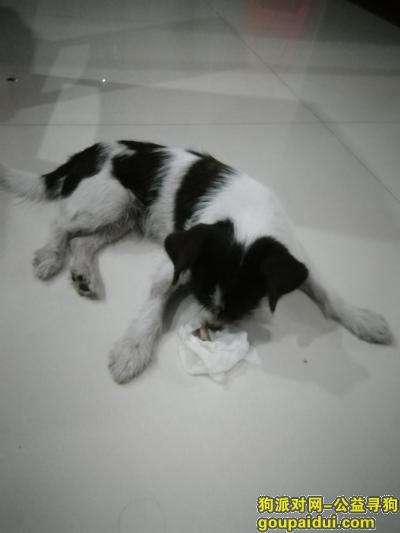 ,在耒阳人民路捡到一条狗,它是一只非常可爱的宠物狗狗,希望它早日回家,不要变成流浪狗。