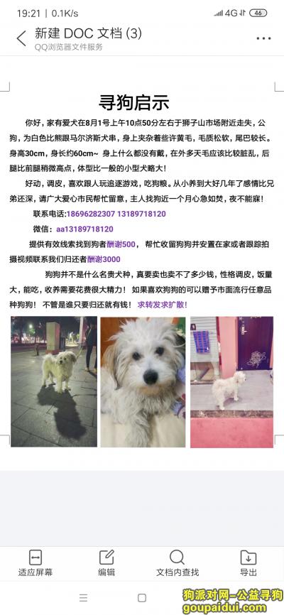 ,寻找白色比熊串欢欢!,它是一只非常可爱的宠物狗狗,希望它早日回家,不要变成流浪狗。