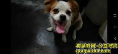 ,8月23号晚上不见的,找到重酬,它是一只非常可爱的宠物狗狗,希望它早日回家,不要变成流浪狗。
