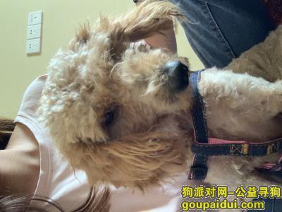 淮安找狗,狗狗很想主人,请把狗狗带回家吧!,它是一只非常可爱的宠物狗狗,希望它早日回家,不要变成流浪狗。