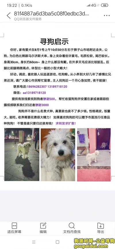 阳江寻狗,找寻我失散一个月的小老弟,它是一只非常可爱的宠物狗狗,希望它早日回家,不要变成流浪狗。