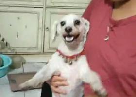 寻狗启示,2019年八月31日晚上9点50,在谢东小区东门走失,如有好心人见到,请联系王女士13525649766,万分感谢。,它是一只非常可爱的宠物狗狗,希望它早日回家,不要变成流浪狗。