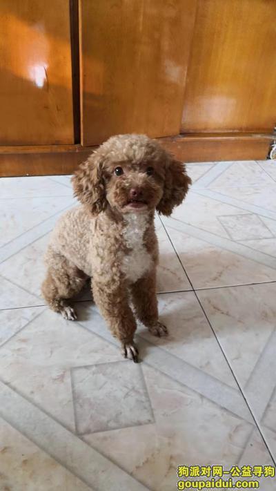 ,2019年9月4日下午5-6点丢失,它是一只非常可爱的宠物狗狗,希望它早日回家,不要变成流浪狗。