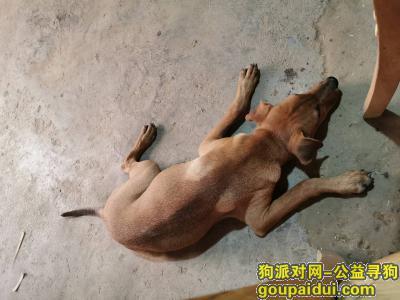 赣州寻狗网,有偿(500)寻狗,2019-9-2龙岭中学附近走失,它是一只非常可爱的宠物狗狗,希望它早日回家,不要变成流浪狗。