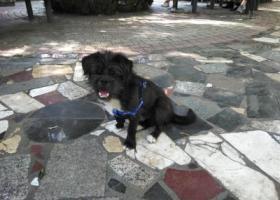 寻狗启示,在兰大一院自家门口丢狗,它是一只非常可爱的宠物狗狗,希望它早日回家,不要变成流浪狗。
