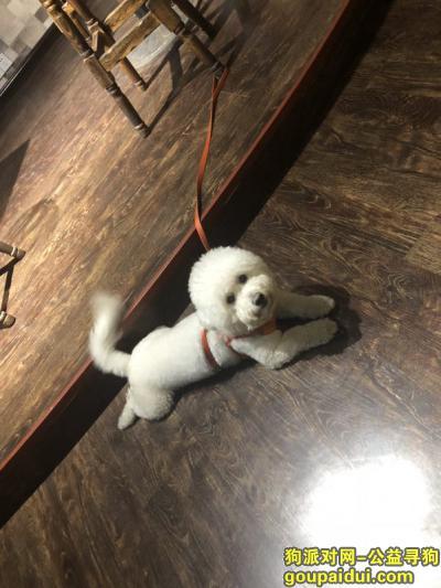 滨州寻狗启示,最最亲爱的狗狗走丢了 希望好心人帮帮忙 必有重谢 重谢!!!,它是一只非常可爱的宠物狗狗,希望它早日回家,不要变成流浪狗。