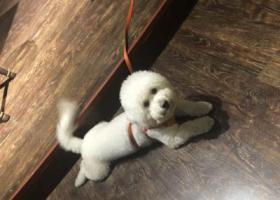 寻狗启示,最最亲爱的狗狗走丢了 希望好心人帮帮忙 必有重谢 重谢!!!,它是一只非常可爱的宠物狗狗,希望它早日回家,不要变成流浪狗。
