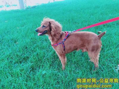 ,它很有特点,很好认的。求大家帮帮我吧,拜托了!,它是一只非常可爱的宠物狗狗,希望它早日回家,不要变成流浪狗。