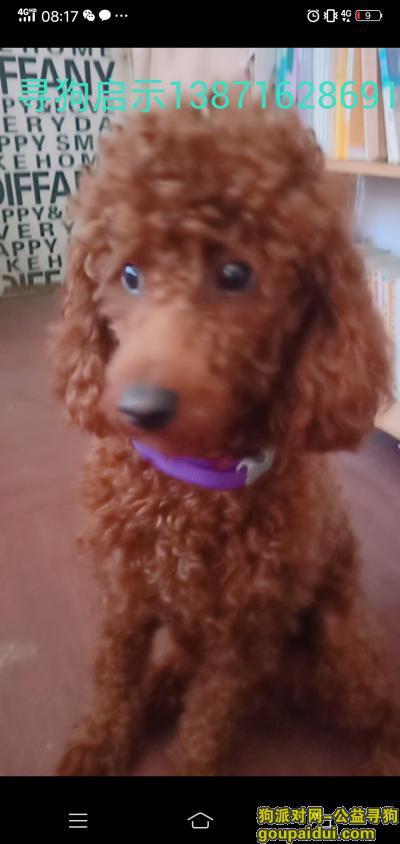 襄阳找狗,襄阳襄城区陈侯巷映丽蚕丝坊找泰迪狗,它是一只非常可爱的宠物狗狗,希望它早日回家,不要变成流浪狗。