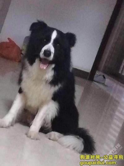 ,吴川市海滨街道井头新村西区二街附近,它是一只非常可爱的宠物狗狗,希望它早日回家,不要变成流浪狗。