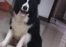 寻狗启示,吴川市海滨街道井头新村西区二街附近,它是一只非常可爱的宠物狗狗,希望它早日回家,不要变成流浪狗。