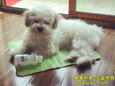 阳江找狗,找寻失散一个月的欢欢小老弟,它是一只非常可爱的宠物狗狗,希望它早日回家,不要变成流浪狗。