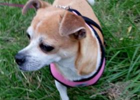 寻狗启示,寻爱犬娜娜 早日回家 只求你平安,它是一只非常可爱的宠物狗狗,希望它早日回家,不要变成流浪狗。