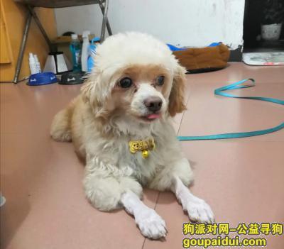 寻狗启示,求好心人帮忙回家,重金酬谢,它是一只非常可爱的宠物狗狗,希望它早日回家,不要变成流浪狗。