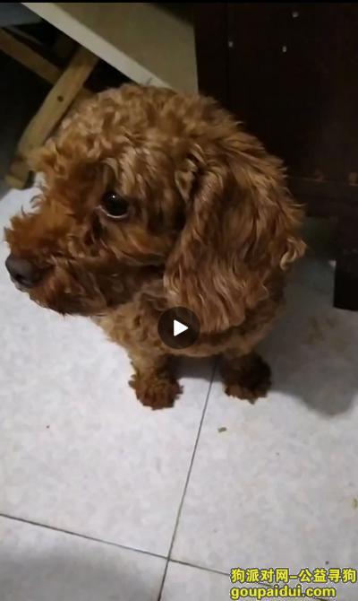 寻狗启示,新华区国泰街找狗狗 急急急急急急急急急,它是一只非常可爱的宠物狗狗,希望它早日回家,不要变成流浪狗。