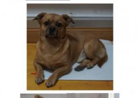 寻狗启示,急寻中秋夜走丢的爱犬金豆,它是一只非常可爱的宠物狗狗,希望它早日回家,不要变成流浪狗。