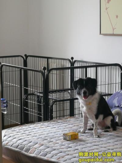 寻狗启示,带着牵引绳和主人联系方式的狗狗走失,它是一只非常可爱的宠物狗狗,希望它早日回家,不要变成流浪狗。