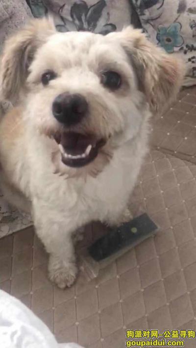 衡水寻狗启示,衡水桃城区河东汽车站附近寻狗启示,它是一只非常可爱的宠物狗狗,希望它早日回家,不要变成流浪狗。