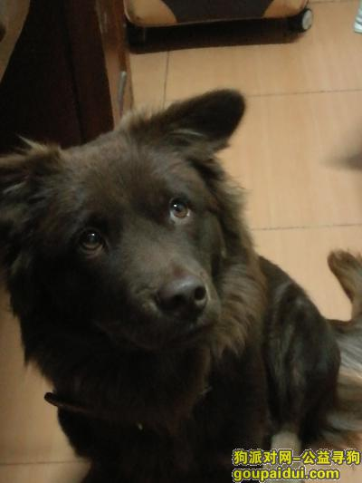 铜陵寻狗网,麻烦大家看到一定要联系我!!感谢大家!,它是一只非常可爱的宠物狗狗,希望它早日回家,不要变成流浪狗。
