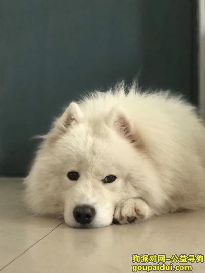 淮南寻狗,汤圆你回来吧你在哪里呀,它是一只非常可爱的宠物狗狗,希望它早日回家,不要变成流浪狗。
