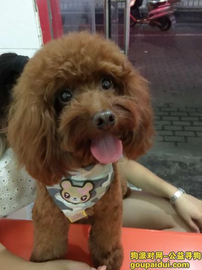 晋中找狗,山西乔家大院附件 红棕泰迪麻烦见到的朋友提供线索,它是一只非常可爱的宠物狗狗,希望它早日回家,不要变成流浪狗。
