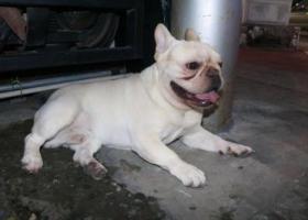 寻狗启示,乐清狗狗丹霞路伯乐西路交叉口附近 名叫雪碧,它是一只非常可爱的宠物狗狗,希望它早日回家,不要变成流浪狗。