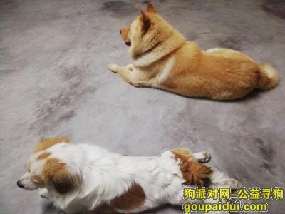 ,9月24号晚上12点左右,它是一只非常可爱的宠物狗狗,希望它早日回家,不要变成流浪狗。
