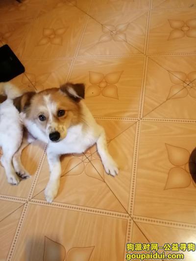 宁波找狗主人,宁波海曙捡到一只小狗,它是一只非常可爱的宠物狗狗,希望它早日回家,不要变成流浪狗。