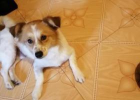 寻狗启示,宁波海曙捡到一只小狗,它是一只非常可爱的宠物狗狗,希望它早日回家,不要变成流浪狗。