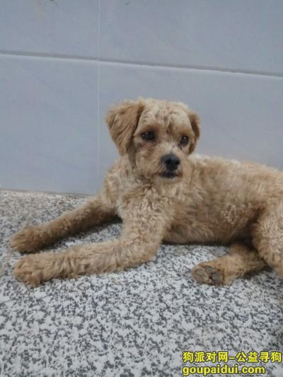 衡阳找狗主人,常宁莲花小学附近捡到狗狗,它是一只非常可爱的宠物狗狗,希望它早日回家,不要变成流浪狗。