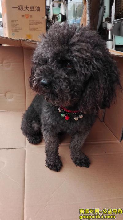 连云港找狗,寻狗启示,找到必重谢,它是一只非常可爱的宠物狗狗,希望它早日回家,不要变成流浪狗。