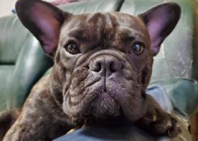 寻狗启示,请帮帮我,找找我的爱犬,它是一只非常可爱的宠物狗狗,希望它早日回家,不要变成流浪狗。