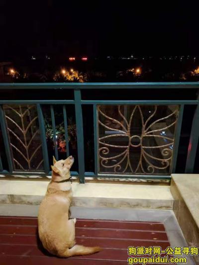 海口寻狗,海口秀英区滨海大道寻狗!,它是一只非常可爱的宠物狗狗,希望它早日回家,不要变成流浪狗。