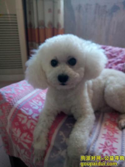 焦作找狗,爱宠兜兜,希望你能回家!,它是一只非常可爱的宠物狗狗,希望它早日回家,不要变成流浪狗。