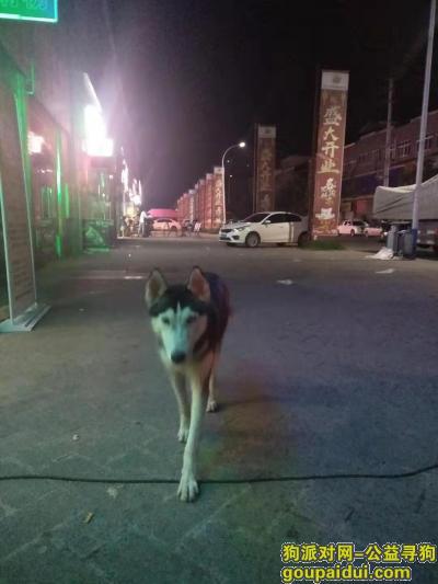 广元寻狗启示,希望你早点找到自己家,它是一只非常可爱的宠物狗狗,希望它早日回家,不要变成流浪狗。